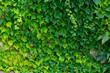 canvas print picture - Efeu Ranke Hintergrund Fassade Wand Mauer Fugen Struktur Kletterpflanze alt Gebäude Kontrast Sonne Licht Schatten Nahaufnahme Makro Ivy grün gemauert Maurer Verfall Lost Place