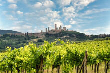 San Gimignano, Vineyards And T...