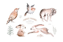 Woodland Animals Set. Owl, Hed...