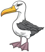 Albatross Bird Animal Characte...
