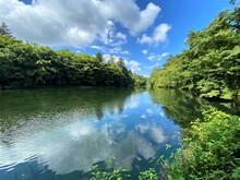 木々に囲まれた池