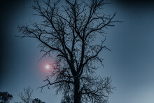 Silhouette Of Tree And Branche...