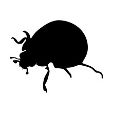 Standing Ladybug(Coccinellidae) On A Side View Silhouette Found In Map Of All Around The World. Good To Use For Element Print Book, Animal Book And Animal Content