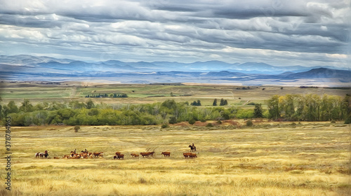 Fotografie, Obraz Cattle country Montana,photo art