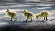 Goslings Crossing Road