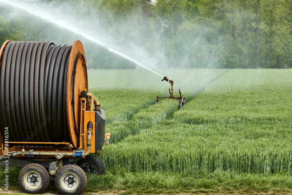 Fototapeta Irrigation reel with moving sprinkler for cultivating a field