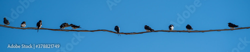 Fotografering The bird on the wire on the blue natural sky background