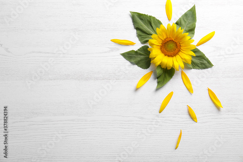 Fotografía Beautiful bright sunflower and petals on white wooden background, flat lay