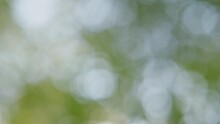 Summer Concept Of Poplar Pollen Flying All Around Air.