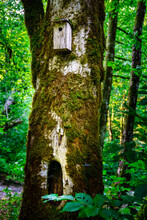 Handmade Birdhouse On The Old Tree With Moss In Forest