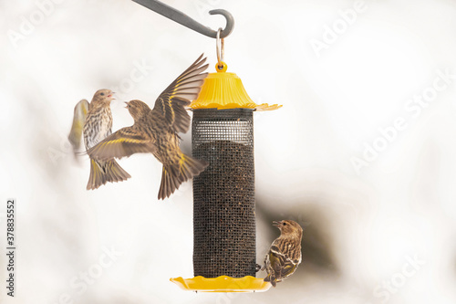 Valokuva birds gathering at the bird  feeder in winter