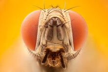 Extreme Close Up Of A Fly Head...