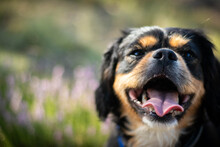 Sweet Smiling Doggy At Sunny Day