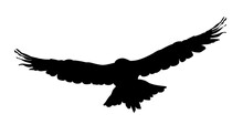 Hawk, Eagle, Falcon Or Orel Black Silhouette Isolated On White Background. A Large Predator Soar In The Air. Clipart Icon, Graphic Simple Element For Design. Vector Illustration.