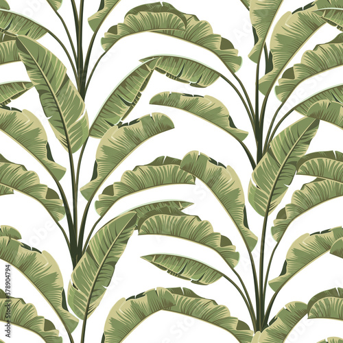 Fototapeta Seamless banana leaves. Vector tropical pattern background. obraz