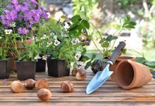 Bulbs Of Flowers On A Garden T...
