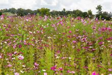 Flower Flowering In The Field ...