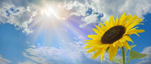 Beautiful Sunflower Sunshine Message Background - Large Yellow Sunflower Head On Right With A Blue Sky Cloudy Background And Sun Burst Above With Copy Space