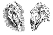 Illustration Of 2 Horse Skull. Set Ink Linear Drawing In Western Style. Engraving Line Art Of Occult Non-living Creature For The Ritual. Modern Print, Design Element Image On The Cover Deceased Animal
