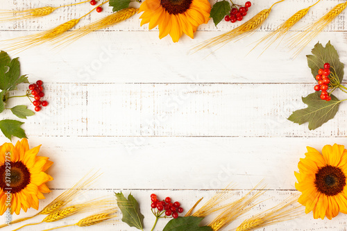 Fototapeta  Concept of fall harvest or Thanksgiving day. Autumn composition with wheat ears, sunflowers and berries on white wooden table. Flat lay, copy space obraz