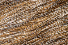 Mixed Colored Animal Fur Background