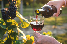 Woman Pouring Red Wine In Vineyard