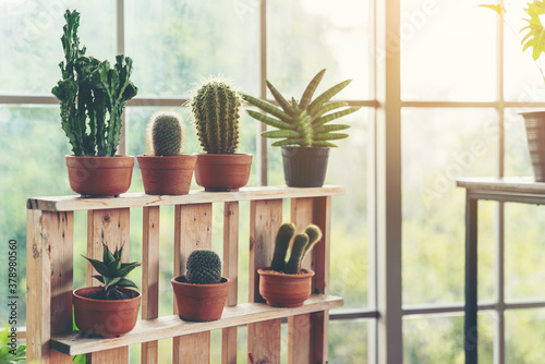 Fotografia Scandinavian room interior with plants, cacti and succulents composition in desi