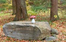 Amanita Wood Mushroom On  Larg...