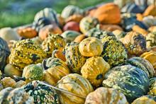 Pumpkin On The Market