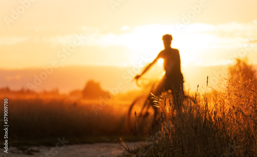 Fototapeta Cyclist silhouette on a gravel bike stands in a field on a beautiful sunset background. obraz