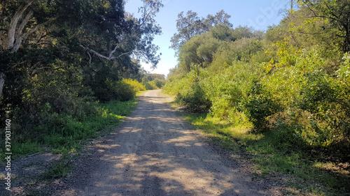 Fototapety, obrazy: Walking Track in the Belmont Wetlands New South Wales Australia