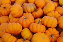 Grouping Of Small Sweetie Pie Miniature Pumpkins For Sale On Wooden Cart At Farmer's Market Outdoor Display
