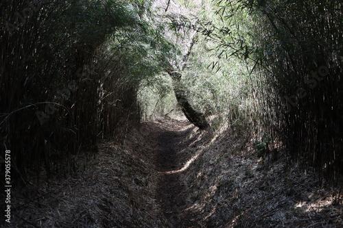 Photo 笹に覆われた登山道