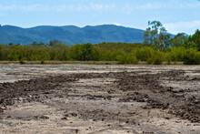 Tire Tracks On Tidal Salt Flats