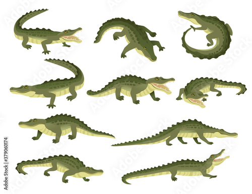 Set of green crocodile character big carnivore reptile cartoon animal design fla Fototapet