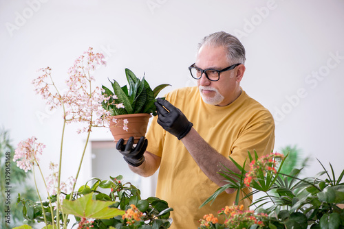 Fototapeta Old male gardener with plants indoors obraz
