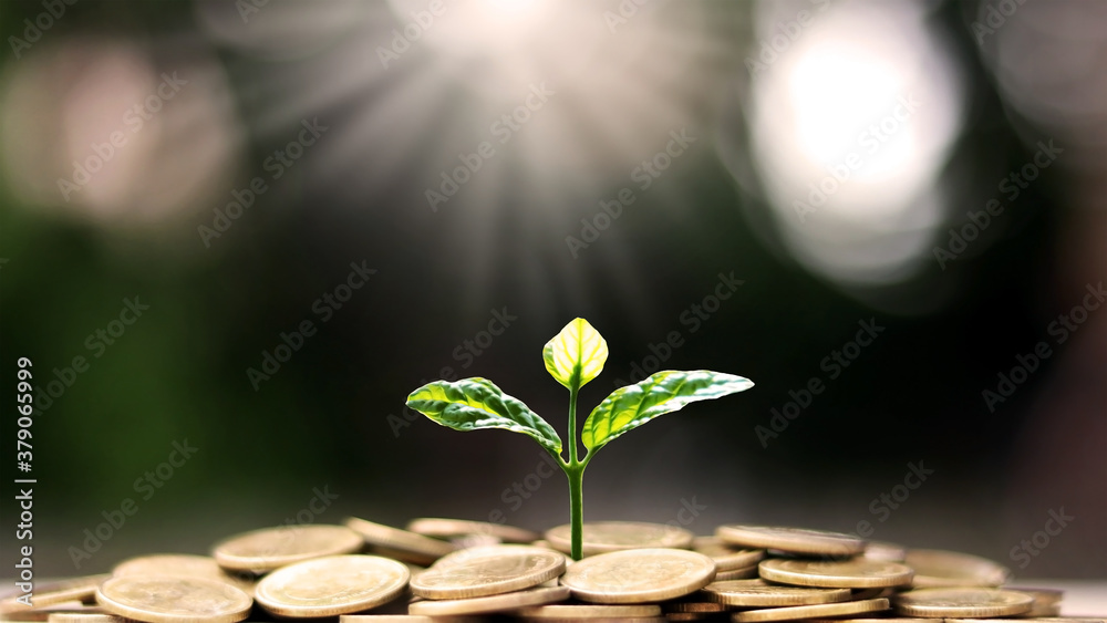 Fototapeta Plant a tree on coin pile with business ideas for finance, saving and economic growth.