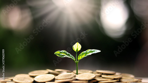 Canvastavla Plant a tree on coin pile with business ideas for finance, saving and economic growth