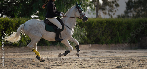 Fotografie, Obraz The horsewoman on a white horse, equestrianism. Horse racing