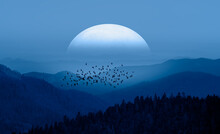 Silhouette Of Birds Flying Ove...