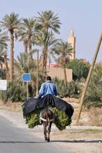 Hombre Transportando Hierbas S...