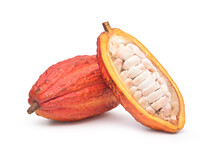 Fresh Cocoa Fruits With Half Sliced And Isolated On White Background With Clipping Path