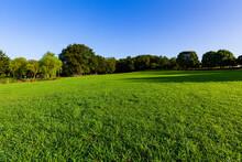 早朝の晴れた草原