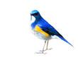 Himalayan Bluetail (tarsiger rufilatus) or orange-flanked bush robin, beautiful blue bird isolated on white background