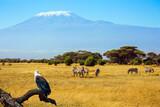 Fototapeta Sawanna - African Fish-Eagle and zebras