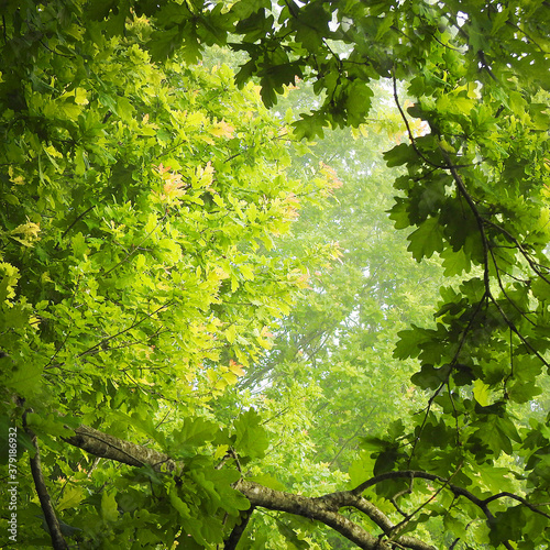 Beautiful view of green wild forest in nature #379186932