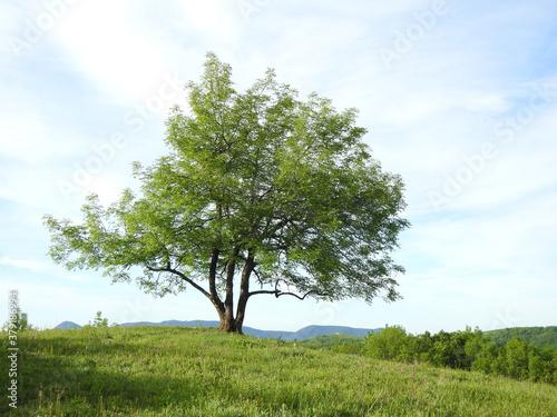 green tree in a field #379186994