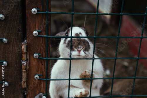 Fotografiet rabbit in a cage