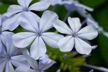 Fiore Da Giardino Viola