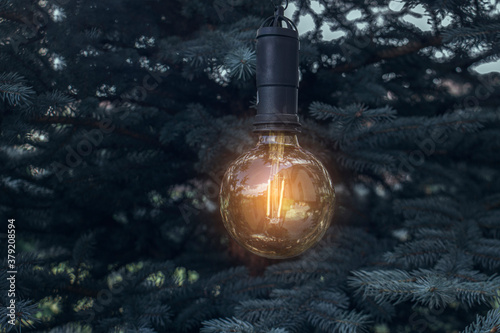 Fototapeta A glowing lightbulb hangs on the branches of a fir in the evening